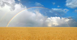 Fototapeta Tęcza - Rainbow Over Wheatfield