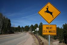 Deer Warning Sign In Country Road