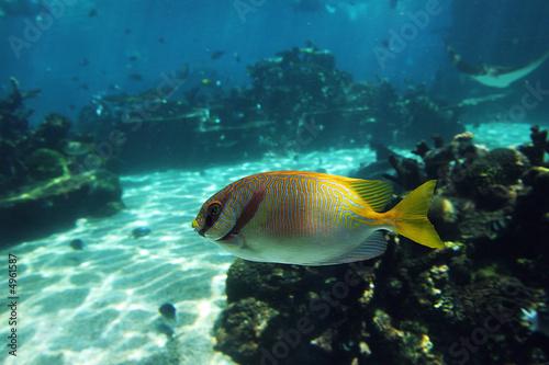 Poster Sous-marin Rabfish