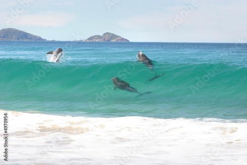 Fotografie, Obraz  Surfing dolphins