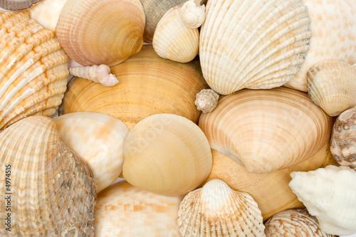 Fotografía Various Seashells