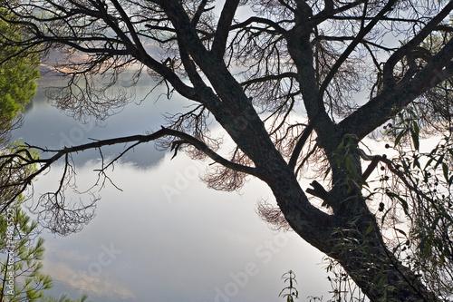 Photo sur Toile Oiseaux sur arbre Pantano de San Juan.