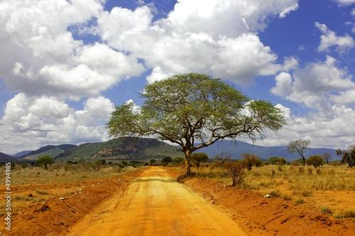 Staande foto Afrika Tsavo Est Kenya