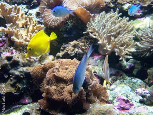 Photo Stands Coral reefs Acurio Peces Tropicales Agua Dulce