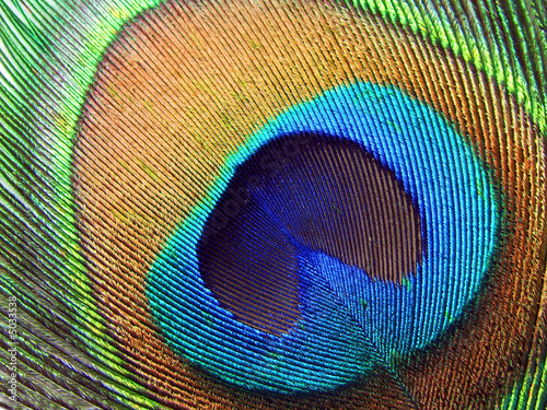 Foto op Canvas Pauw Peacock eye.