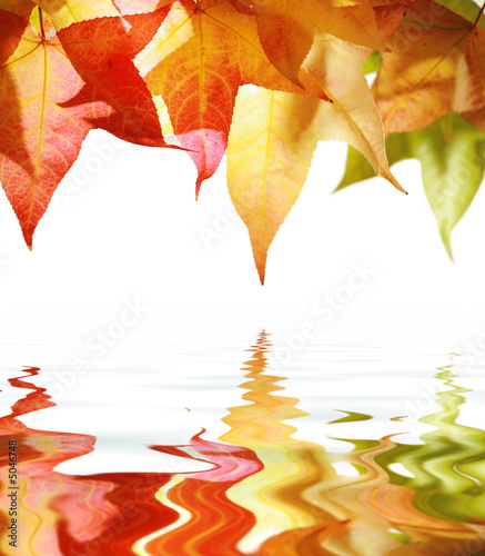 Red and yellow autumn leaves isolated on white. Slika na platnu