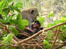 Monkey Baby Forest Indonesia B...
