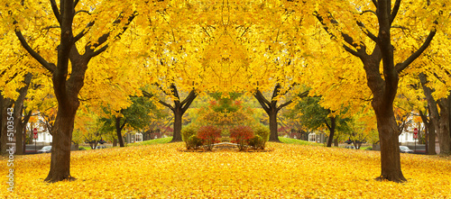 Wall Murals Melon yellow maple leaves landscapes
