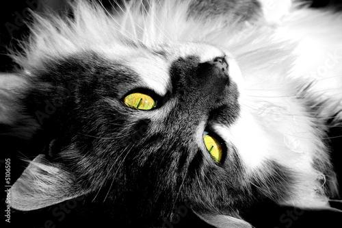 Photo sur Toile Croquis dessinés à la main des animaux My cat