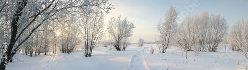 Obraz Panorama of freezing day. - fototapety do salonu