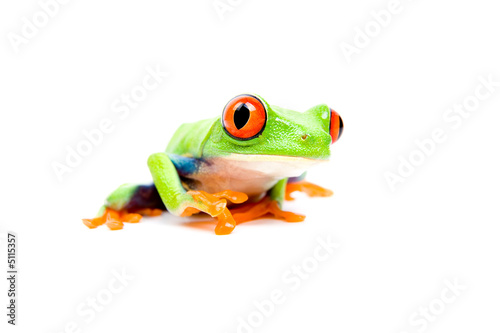 Tuinposter Kikker frog closeup on white