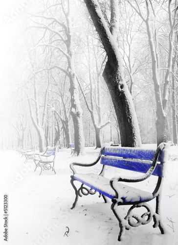 Fototapety, obrazy: Blue benches in the fog in winter