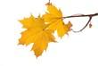 canvas print picture - Herbstblatt