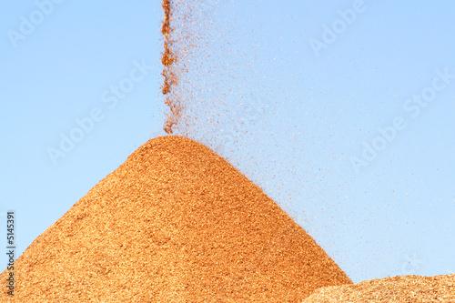 Fotografia, Obraz  Pile of pouring wood chips