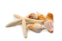 Starfish And Shells On White Background