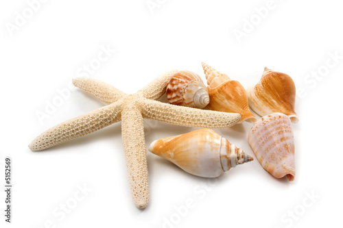 Akustikstoff - starfish and shells on white background