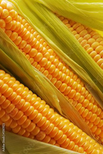Fotografía  Corn