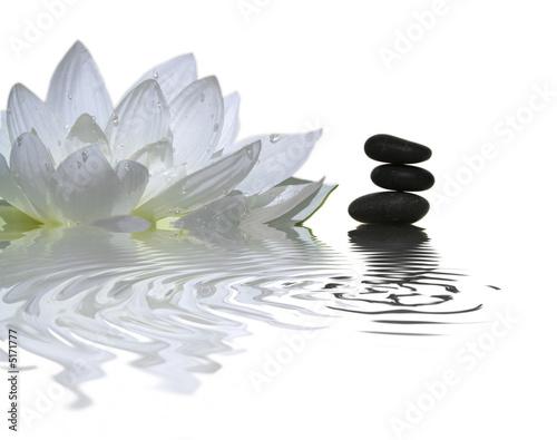 Foto op Canvas Lotusbloem l'instant zen