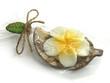 bougie fleur de frangipanier sous emballage plastique