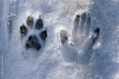 Papiers peints Loup patte et main