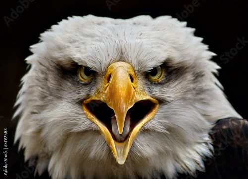 In de dag Eagle Screaming Eagle