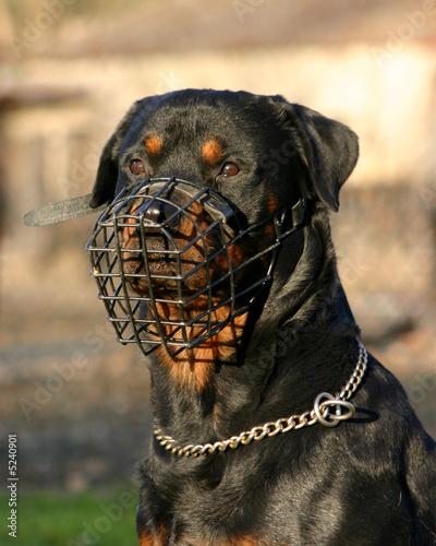 Vászonkép chien dangereux
