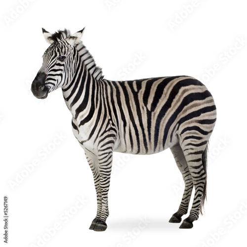 Cadres-photo bureau Zebra Zebra