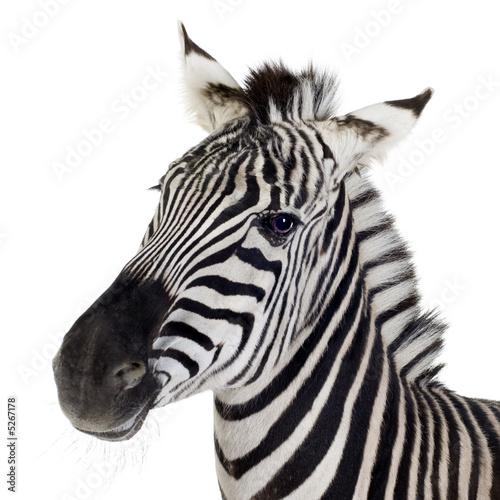 Cadres-photo bureau Zebra Zebra