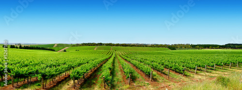 Photo sur Aluminium Vignoble Green Vineyard Landscape