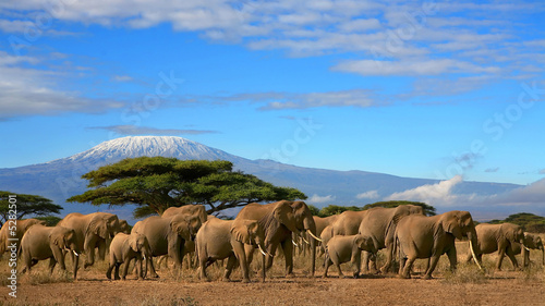 Deurstickers Afrika Kilimanjaro With Elephant Herd