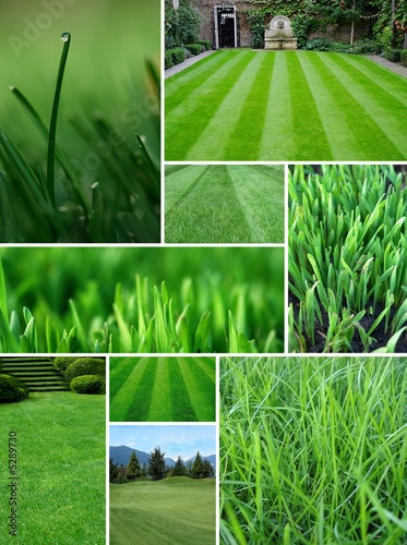 Poster Olive green grass
