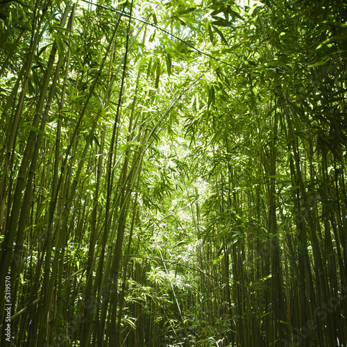 In de dag Bamboo Bamboo forest.