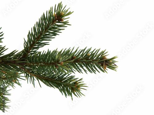 Obraz na płótnie Christmas Tree Limb