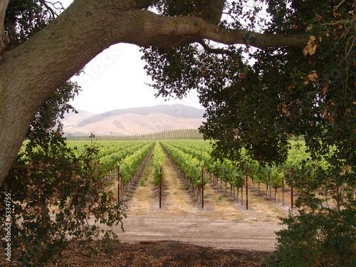 Fotografie, Obraz  California Winery
