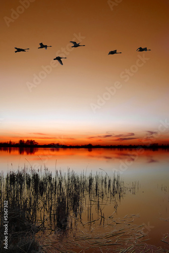 Foto-Leinwand - Dusk by the lake with a flock of ducks
