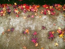 Maple Leaf Graffiti !