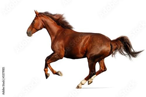 Gallop horse