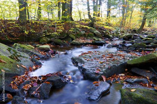 Foto op Aluminium Khaki Autumn River