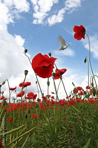 In de dag Poppy Fields of Peace