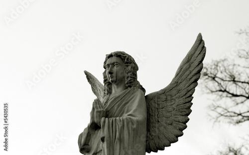 Fototapety, obrazy: angel