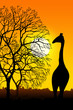 canvas print picture Africa