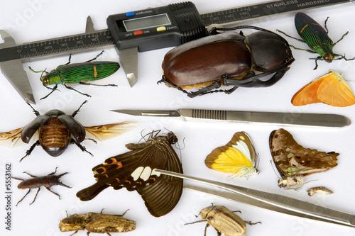 Fényképezés Image of a typical entomologist's work table.