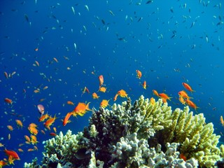 Fototapeta na wymiar Korallenriff