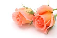 Salmon Pink Rosebuds