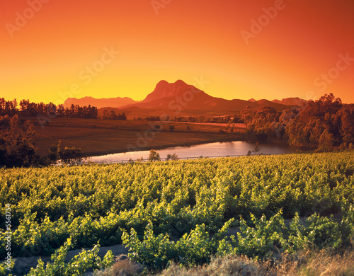 Canvas Prints Orange Glow Weinberge bei Paarl, Südafrika