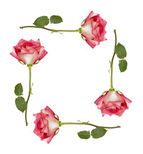 Ombre Roses Frame