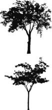 Tree Silhouettes B