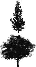 Tree Silhouettes E