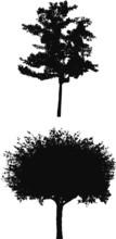 Tree Silhouettes F