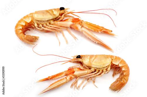 Fotografía  Shrimps